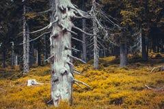 与干燥树和五颜六色的叶子的秋天森林喜怒无常的风景 库存图片