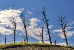 与干燥树的山风景在一个晴天 库存图片