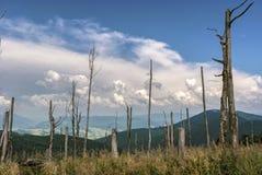 与干燥树的山风景在一个晴天 免版税图库摄影