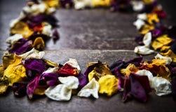 与干燥玫瑰花瓣的框架在木背景 图库摄影