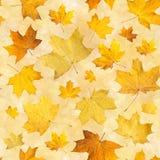 与干燥秋叶的无缝的样式 槭树桔子背景按了叶子 免版税库存照片