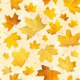 与干燥秋叶的无缝的样式 槭树桔子背景按了叶子 库存照片