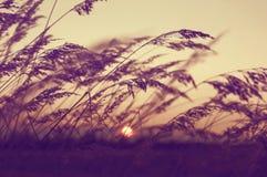 与干燥芦苇的秋天风景 图库摄影