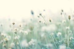 与干燥花的夏天抽象淡色自然背景 免版税库存图片