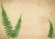 与干燥蕨的老葡萄酒纸纹理离开 皇族释放例证