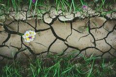 与干燥高明的地面的背景与花和绿草 库存图片