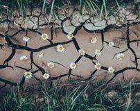 与干燥高明的地面的背景与花和绿草 免版税库存照片