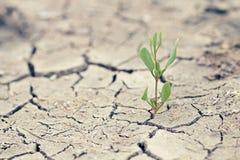 与干燥破裂的地球的绿色新芽 免版税库存图片