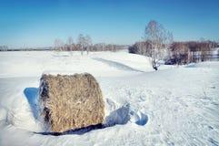 与干草卷的明亮的冬天风景在领域的 库存图片