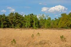与干草和杉木森林,卡尔姆特豪特,富兰德,比利时的荒地风景 免版税库存照片