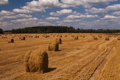 与干草堆的美丽如画的金黄领域 免版税库存图片