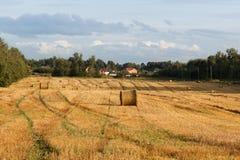 与干草堆的黄色领域在收获以后 库存图片