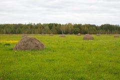 与干草小组的绿色领域 擦,农业为动物饲养,乌克兰乡下 免版税库存照片