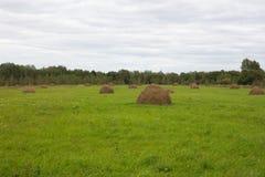 与干草小组的绿色领域 擦,农业为动物饲养,乌克兰乡下 库存照片