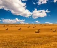 与干草捆和美丽的蓝色多云天空的金黄秸杆领域 金黄黄色颜色的收获草甸 库存照片
