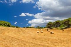 与干草捆的晴朗的领域 库存图片