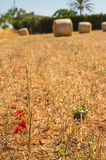 与干草捆的风景,马略卡,西班牙 免版税库存照片