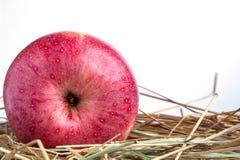 与干草的红色苹果计算机在白色背景 库存照片