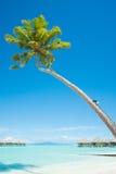 与平房的棕榈树在水在博拉博拉岛 免版税库存图片