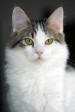 与平纹标号小猫的八个月的白色 免版税库存照片