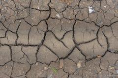 与年幼植物和pepbles的旱田泥 图库摄影