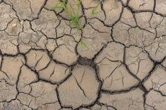 与年幼植物和pepbles的旱田泥 免版税库存图片