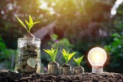 与年幼植物的硬币在软的自然ba的顶面和电灯泡的 库存照片
