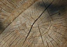 与年轮的年迈的被锯的木头 库存图片