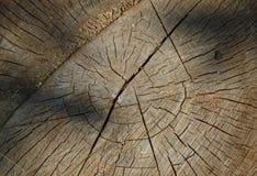 与年轮的年迈的被锯的木头 免版税库存图片