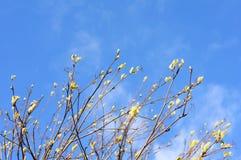 与年轻人的树枝在春天离开 免版税库存照片