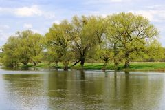与年轻叶子的树在河岸在一个晴朗的春日 自然的横向 免版税库存图片