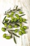 与年轻橄榄色的枝杈的被收获的新鲜的橄榄在木backgrou 免版税库存图片