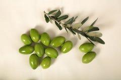 与年轻橄榄色的枝杈的被收获的新鲜的橄榄在白色backgroun 免版税库存照片