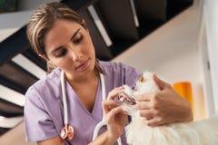 与年轻狩医参观的狗的家庭急诊在家 库存照片
