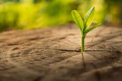 与幼木生长新芽树的新的生活概念 免版税库存图片