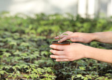 与幼木的花盆 免版税图库摄影
