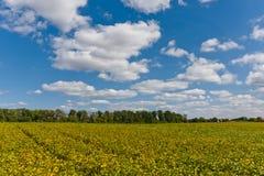 与幼木的领域 农业横向 免版税库存照片