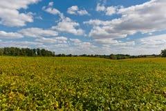 与幼木的领域 农业横向 库存图片