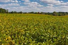 与幼木的领域 农业横向 免版税图库摄影
