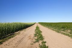 与庄稼的一个农业领域 库存图片