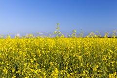 与庄稼的一个农业领域 免版税库存图片