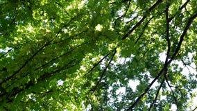 与底部的绿色树型视图对与转动 股票视频