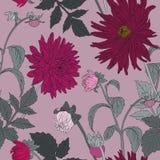 与庭院翠菊的无缝的样式 免版税库存图片
