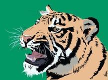 与开放他的嘴的大和美丽的老虎 向量例证