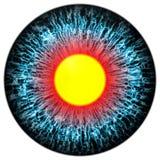 与开放学生和明亮的黄色视网膜的蓝眼睛在背景中 在学生,被隔绝的眼睛附近的黑暗的五颜六色的虹膜 免版税库存图片