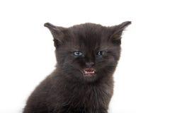 与开放它的嘴的黑小猫 库存图片