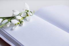 与开放笔记本的美好的白色snowdrops在白色背景 免版税库存照片