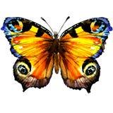 与开放翼的美丽的欧洲孔雀铗蝶,顶视图,被隔绝,在白色的水彩例证 免版税库存照片