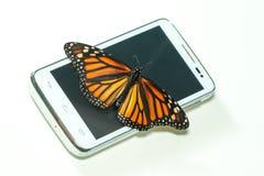 与开放翼的黑脉金斑蝶在手机,生态 免版税库存照片