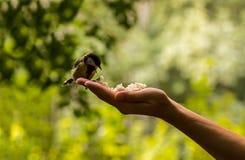 与开放额嘴的山雀坐手的棕榈 图库摄影
